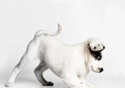 Gestalt asistida con perros